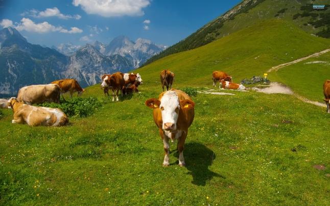 Фото - Direct Dairy