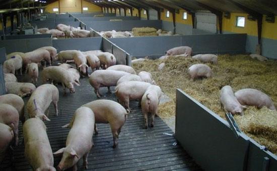 Фото - Организация фермы, производящей мясные продукты.