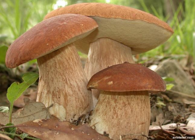 Фото - Сбор и переработка дикоростущих ягод и грибов
