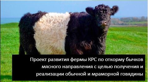 Фото - Создание КРС фермы в Ярославской области