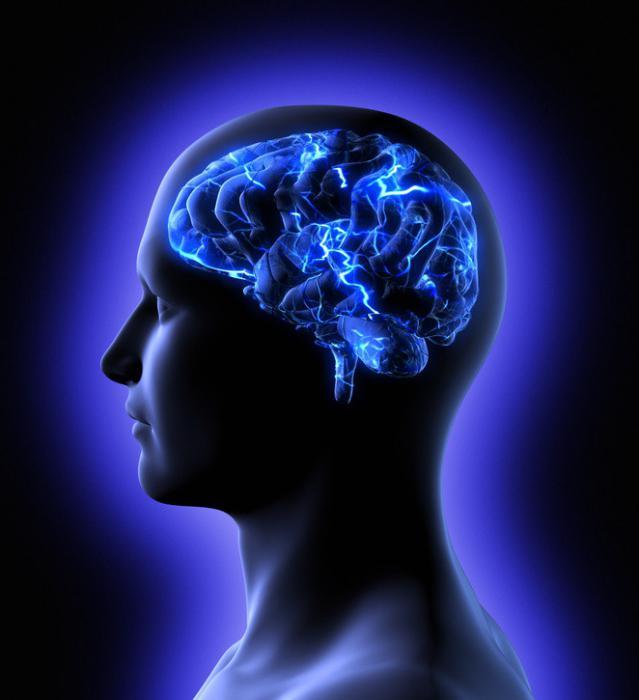 Фото - Програмный продукт нейропсихологической диагностики