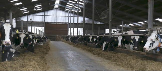 Фото - Молочная ферма