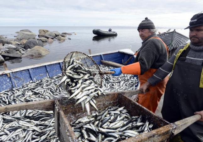 Фото - Высокоприбыльный проект по развитию рыбоконсервного завода