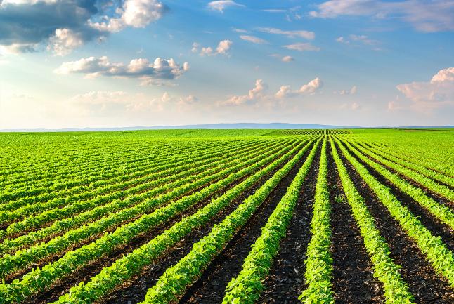 Фото - Выращивание картофеля