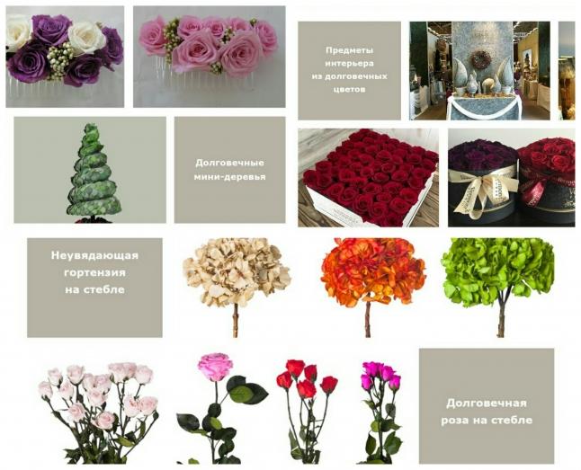 Фото - Магазин неувядающих цветов