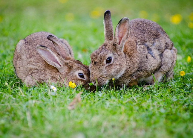 Фото - создание кролиководческой фермы.