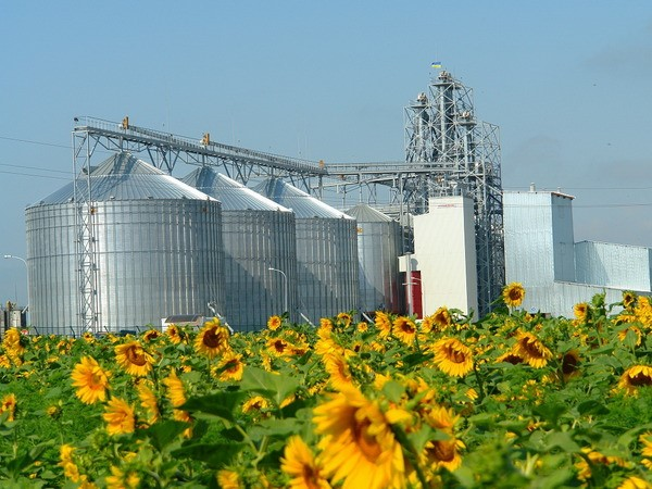Фото - Создание предприятия по переработке семян подсолнечника