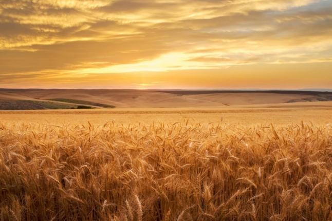 Фото - Принципиально новый подход к производству сельхоз продукции