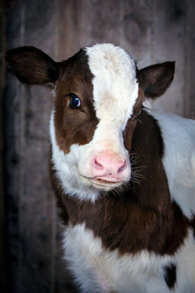 Фото - Парное молоко