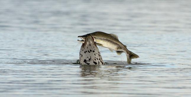 Фото - Рыбная продукция по сходной цене в каждый дом