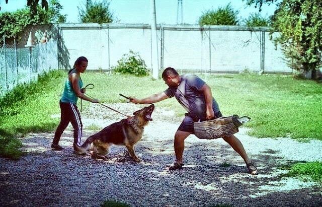Фото - Центр дрессировки собак